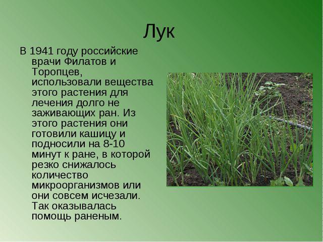Лук В 1941 году российские врачи Филатов и Торопцев, использовали вещества эт...