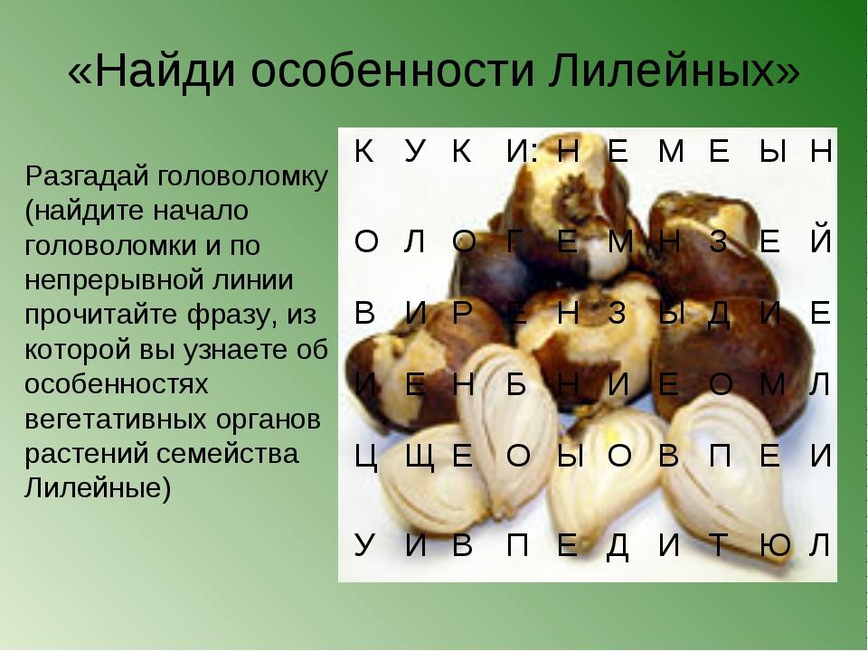 «Найди особенности Лилейных» Разгадай головоломку (найдите начало головоломк...