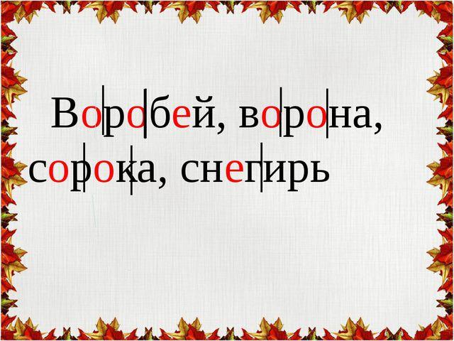 Воробей, ворона, сорока, снегирь