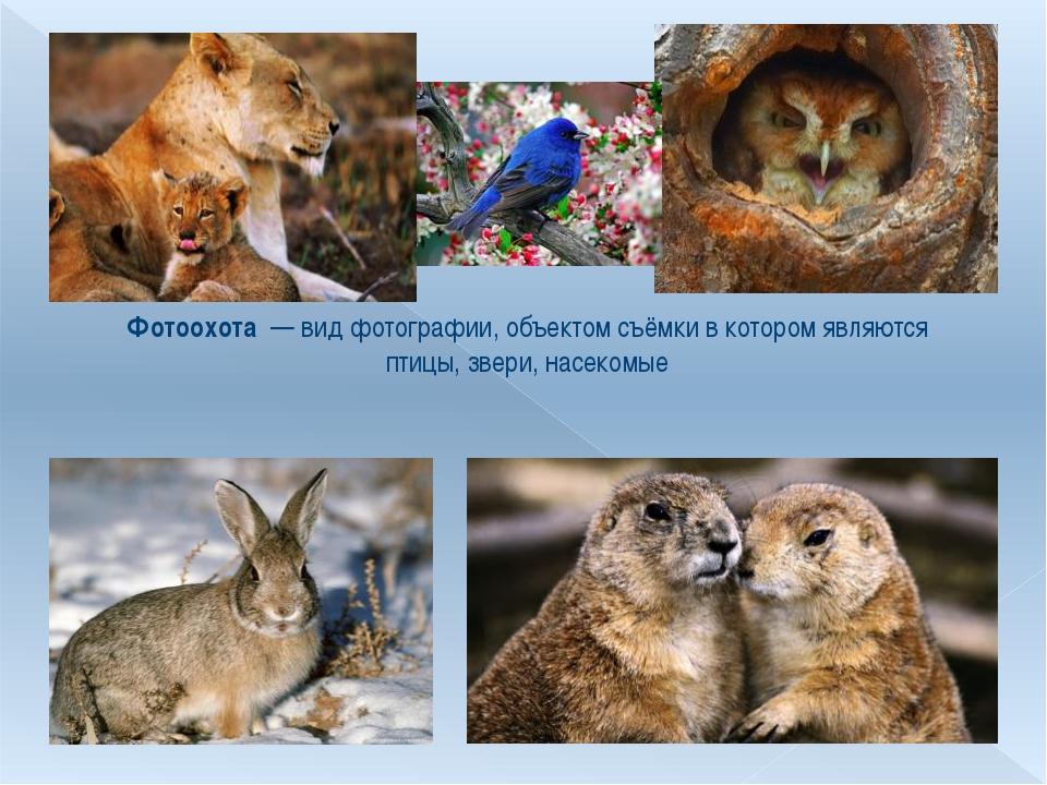 Фотоохота — вид фотографии, объектом съёмки в котором являются птицы, звери,...