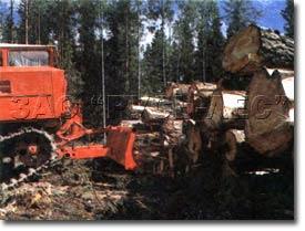 Лесозаготовка