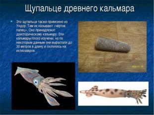 Щупальце древнего кальмара Это щупальце также привезено из Ундор. Там их назы