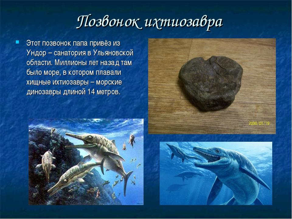 Позвонок ихтиозавра Этот позвонок папа привёз из Ундор – санатория в Ульянов...