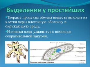 Твердые продукты обмена веществ выходят из клетки через клеточную оболочку в