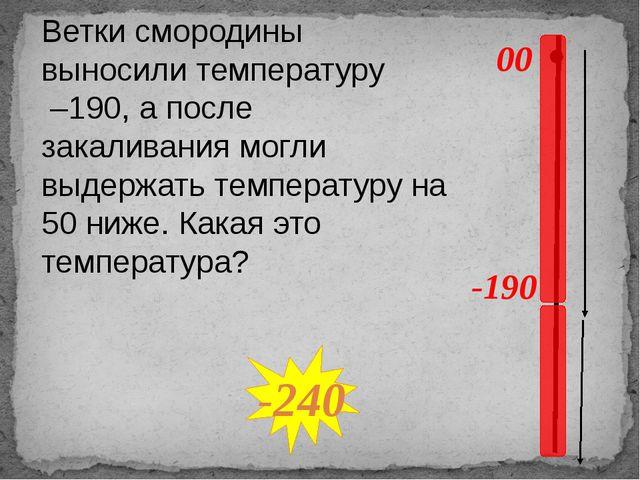 00 -190 Ветки смородины выносили температуру –190, а после закаливания могли...