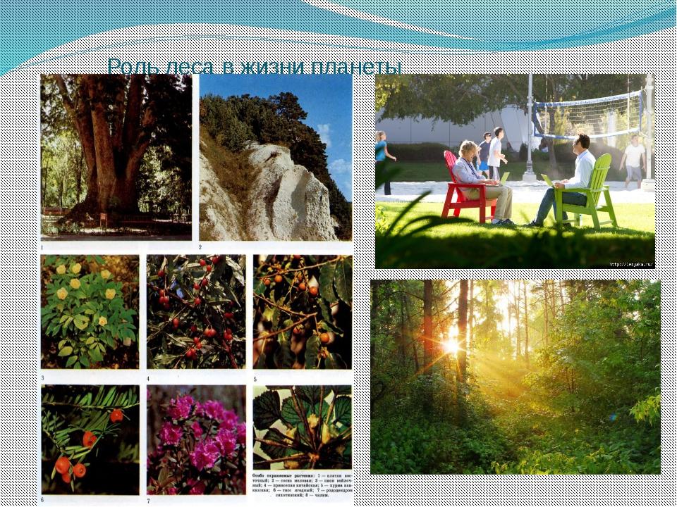 Роль леса в жизни планеты