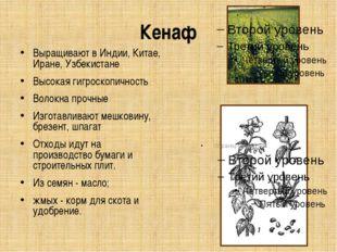 Кенаф Выращивают в Индии, Китае, Иране, Узбекистане Высокая гигроскопичность