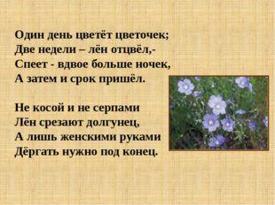 Один день цветёт цветочек; Две недели – лён отцвёл,- Спеет - вдвое больше ноч