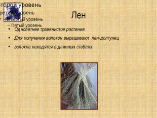 Лен Однолетнее травянистое растение Для получения волокон выращивают лен-долг