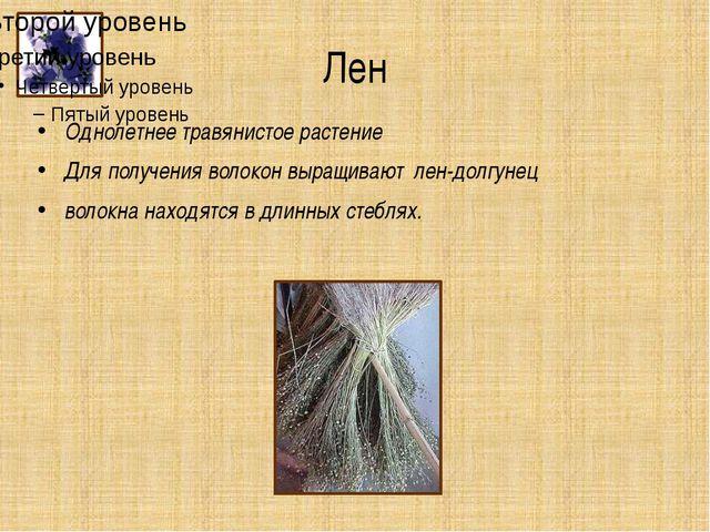 Лен Однолетнее травянистое растение Для получения волокон выращивают лен-долг...