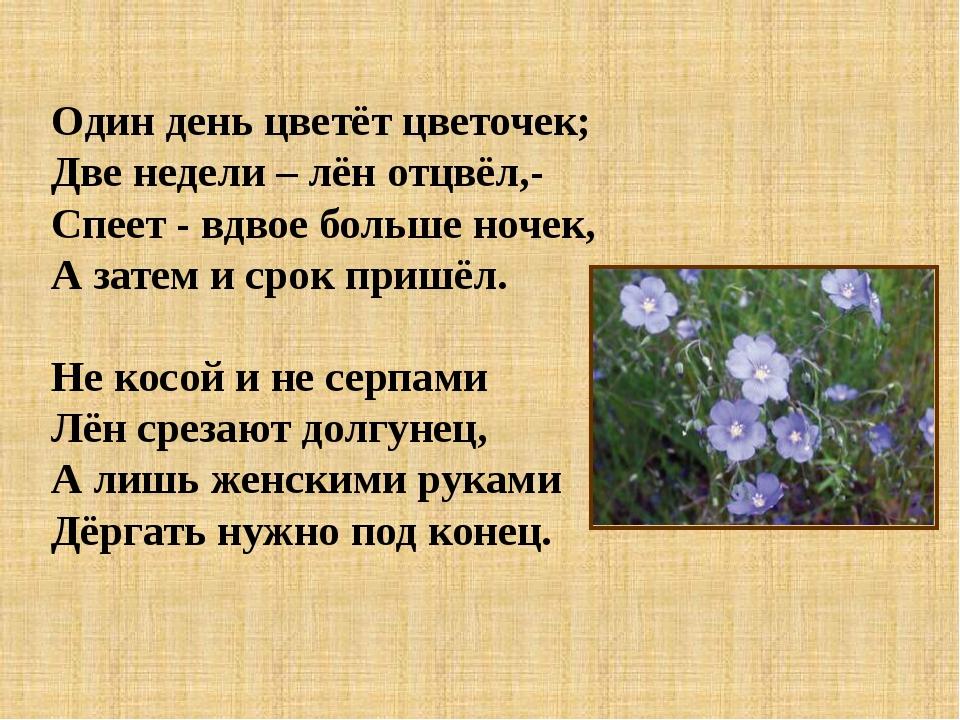 Один день цветёт цветочек; Две недели – лён отцвёл,- Спеет - вдвое больше ноч...