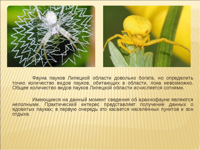 Фауна пауков Липецкой области довольно богата, но определить точно количеств...