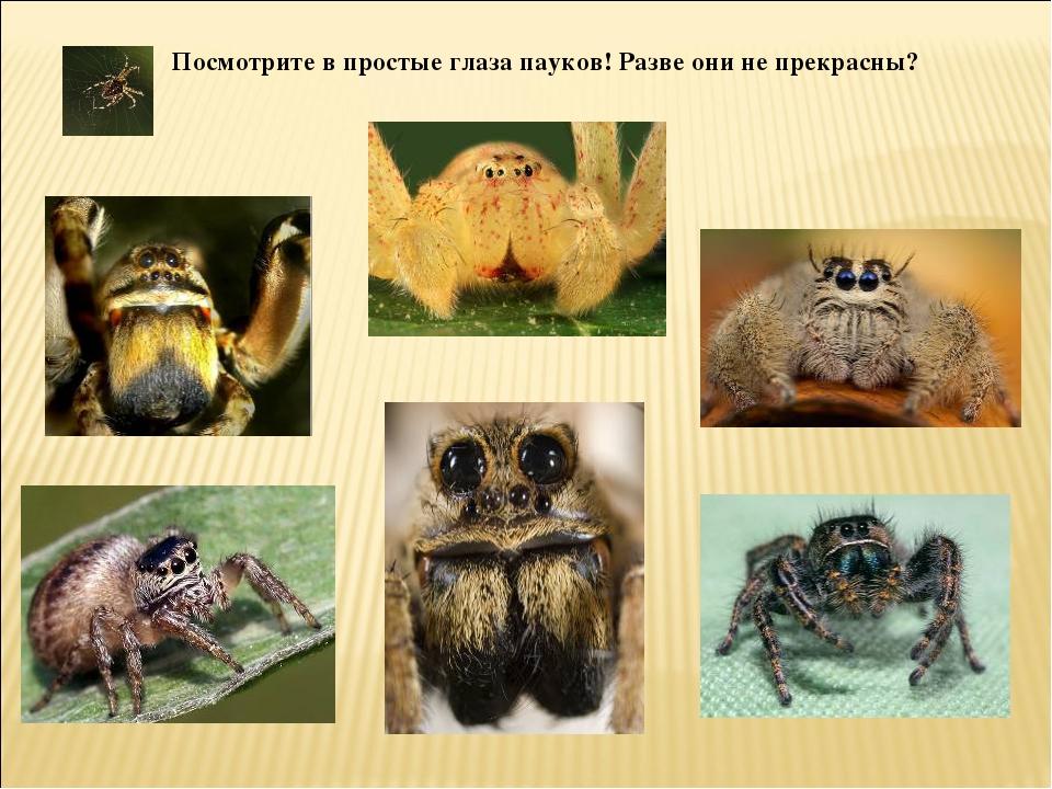 Посмотрите в простые глаза пауков! Разве они не прекрасны?