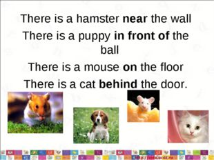 There is a hamster near the wall There is a puppy in front of the ball There