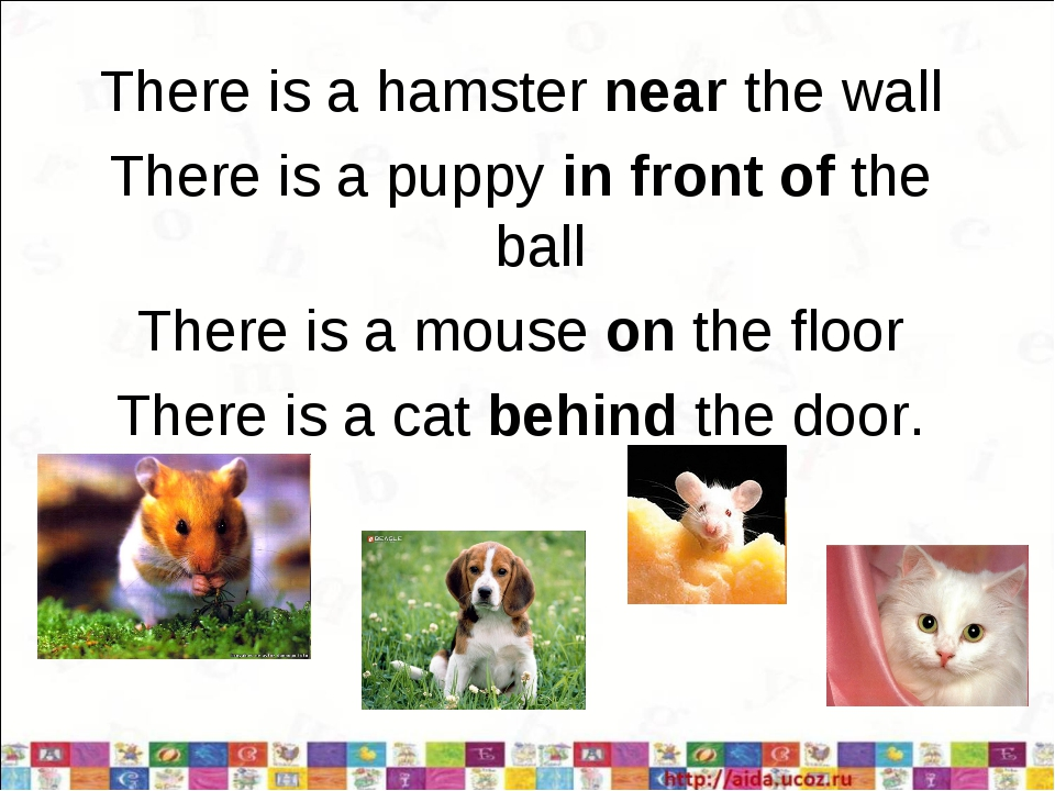 There is a hamster near the wall There is a puppy in front of the ball There...
