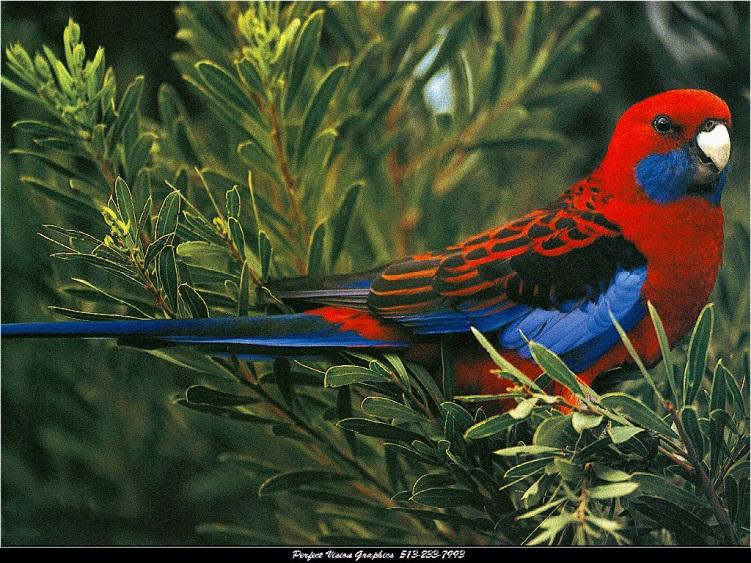 D:\рисунки и фото\картинки\Животный мир\Птицы\00017366.jpg