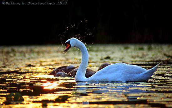 D:\рисунки и фото\картинки\Животный мир\Птицы\00017007.jpg