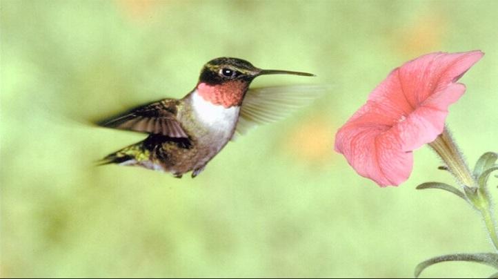 D:\рисунки и фото\картинки\Животный мир\Птицы\00016870.JPG