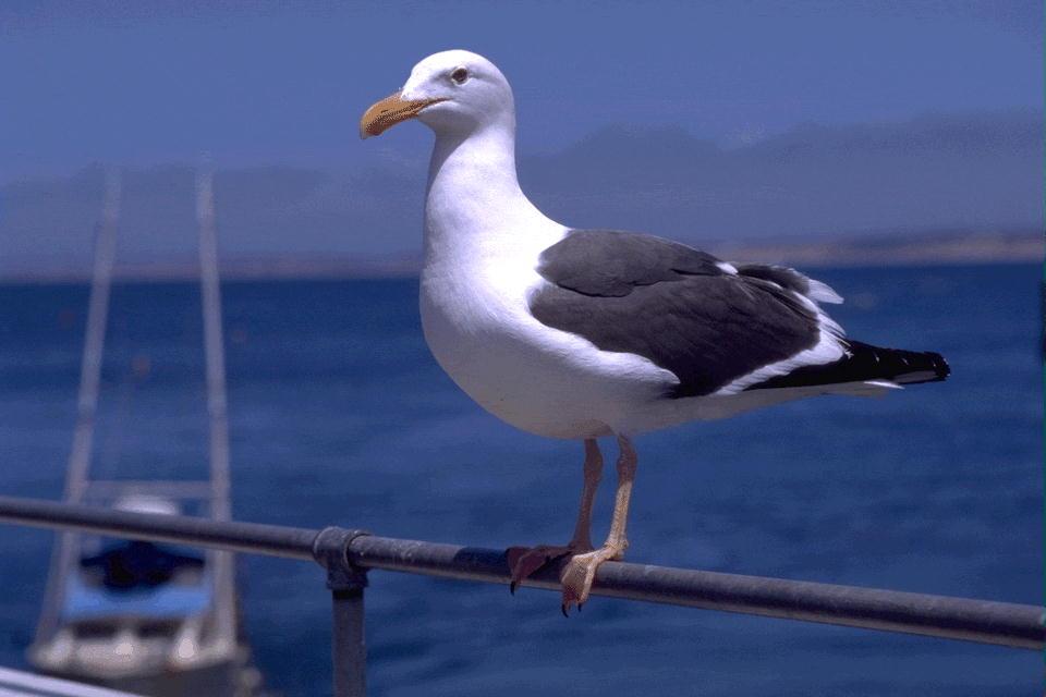 D:\рисунки и фото\картинки\Животный мир\Птицы\00016882.JPG