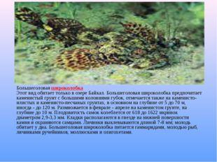 Большеголовая широколобка Этот вид обитает только в озере Байкал. Большеголо