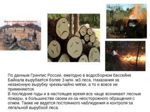 По данным Гринпис России, ежегодно в водосборном бассейне Байкала вырубается