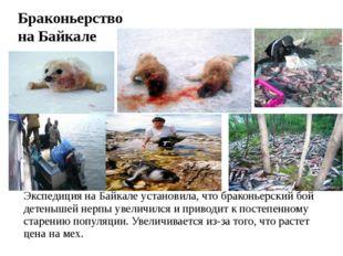 Браконьерство на Байкале Экспедиция наБайкале установила, что браконьерский