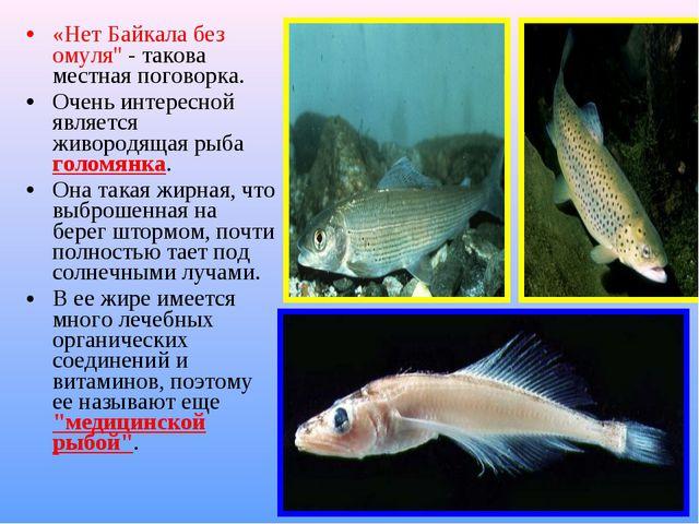 """«Нет Байкала без омуля"""" - такова местная поговорка. Очень интересной является..."""