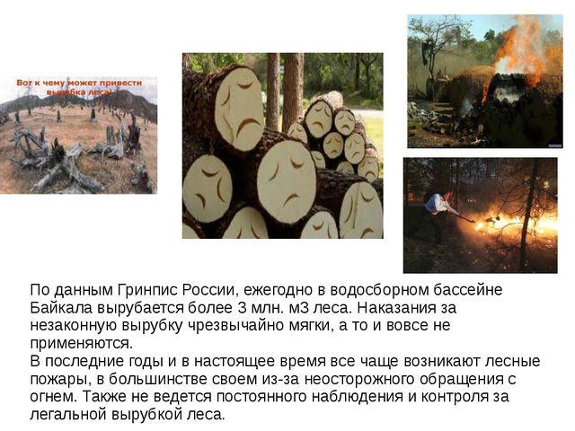 По данным Гринпис России, ежегодно в водосборном бассейне Байкала вырубается...