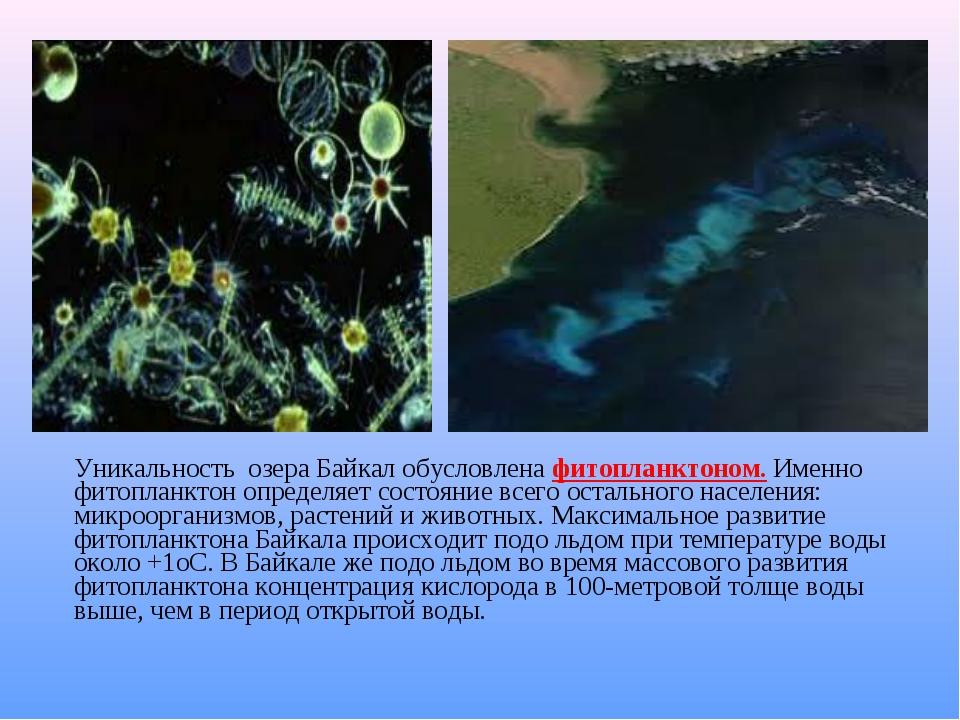 Уникальность озера Байкал обусловлена фитопланктоном. Именно фитопланктон оп...