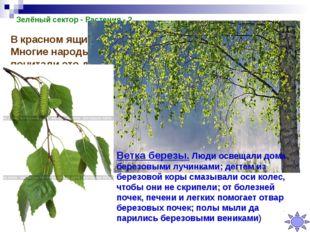 Зелёный сектор - Растения - 2 В красном ящике лежит ветка этого дерева. Многи