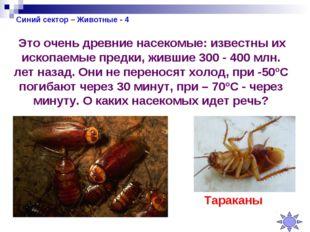 Синий сектор – Животные - 4 Это очень древние насекомые: известны их ископаем