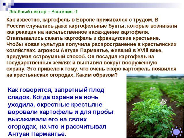 Зелёный сектор – Растения -1 Как известно, картофель в Европе приживался с тр...