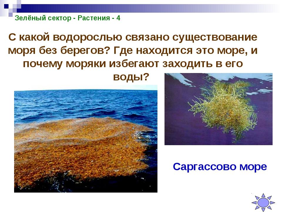 Зелёный сектор - Растения - 4 С какой водорослью связано существование моря б...