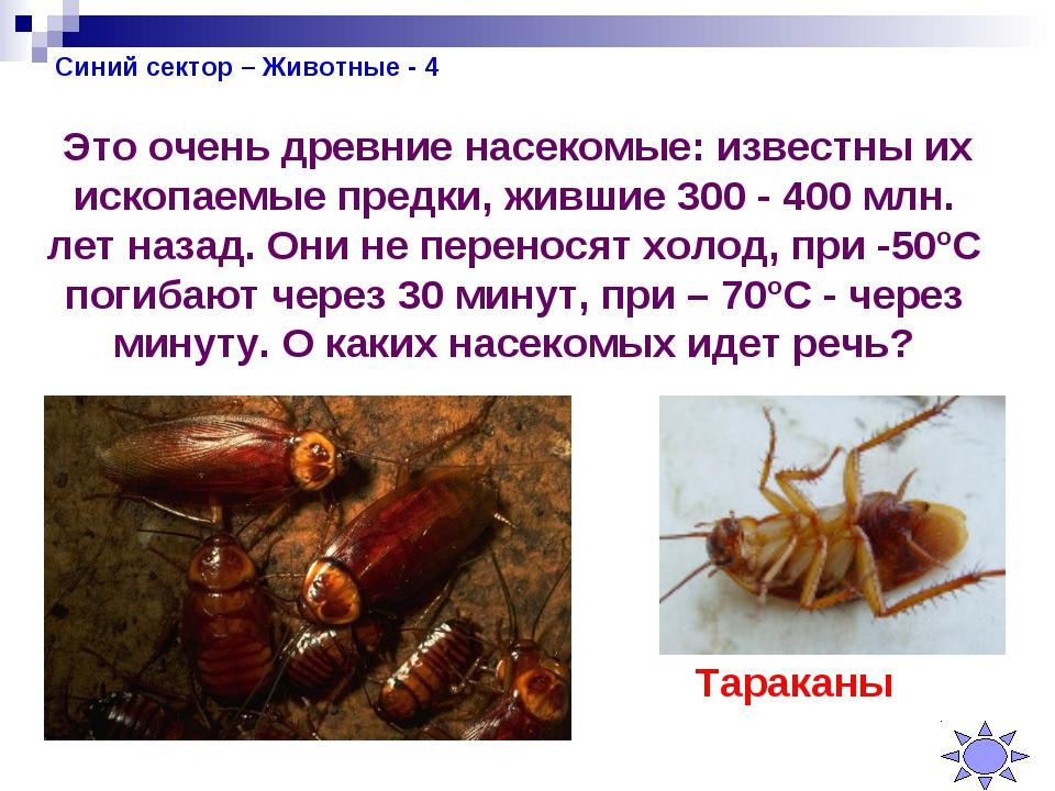 Синий сектор – Животные - 4 Это очень древние насекомые: известны их ископаем...