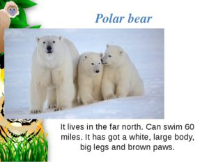 It lives in the far north. Can swim 60 miles. It has got a white, large body,