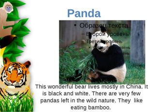 This wonderful bear lives mostly in China. It is black and white. There are v