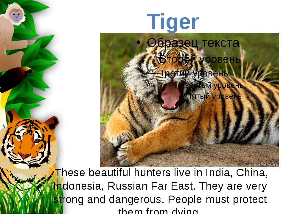 These beautiful hunters live in India, China, Indonesia, Russian Far East. T...
