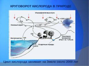 КРУГОВОРОТ КИСЛОРОДА В ПРИРОДЕ Цикл кислорода занимает на Земле около 2000 лет