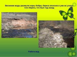 Работа вод Весенние воды размыли норы бобра, берега оползли и уже не узнать т