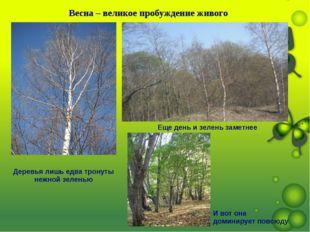 Весна – великое пробуждение живого Деревья лишь едва тронуты нежной зеленью Е