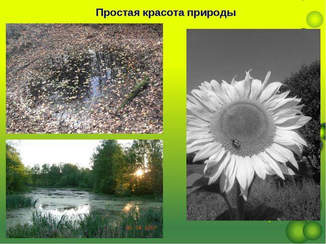 Простая красота природы
