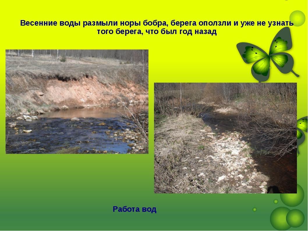 Работа вод Весенние воды размыли норы бобра, берега оползли и уже не узнать т...