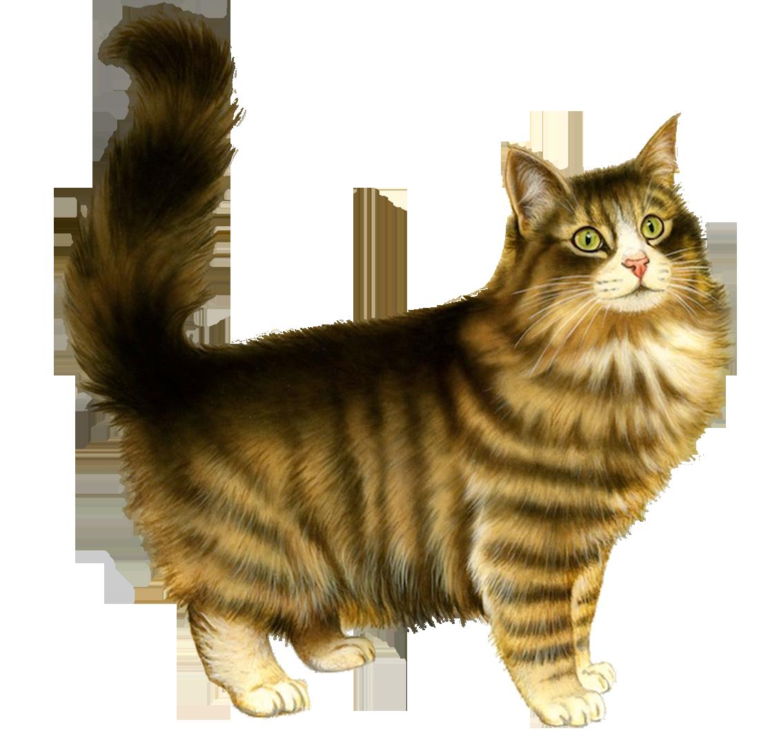 Сусанин, кошки картинка для детей