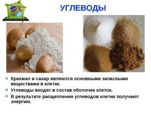 УГЛЕВОДЫ Крахмал и сахар являются основными запасными веществами в клетке. Уг