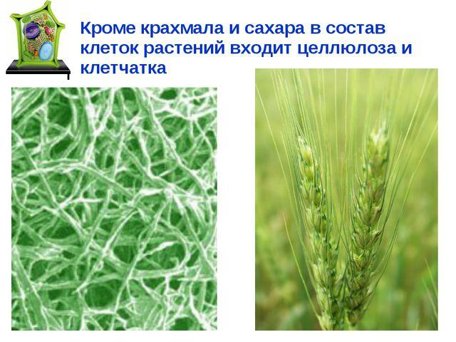 Кроме крахмала и сахара в состав клеток растений входит целлюлоза и клетчатка