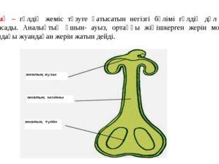 Аналық – гүлдің жеміс түзуге қатысатын негізгі бөлімі гүлдің дәл ортасына орн