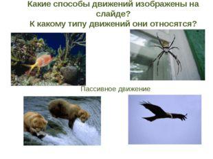 Зависание с помощью приспособлений (паутина, лиана, другие животные) Парение