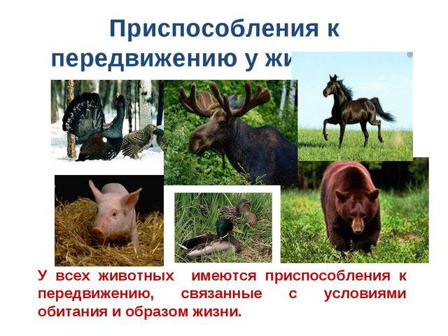 Приспособления к передвижению у животных У всех животных имеются приспособлен...