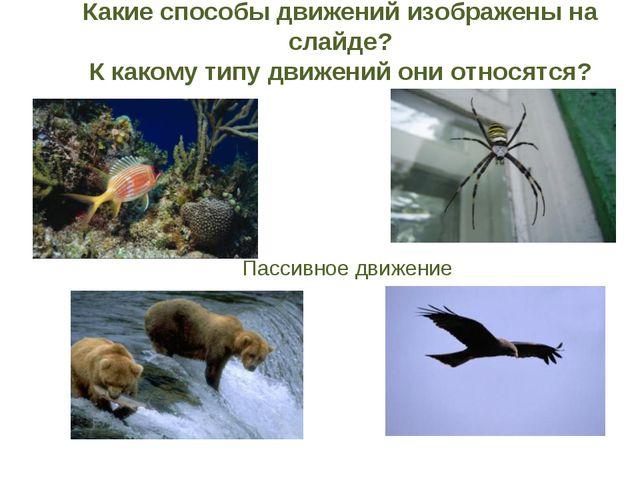 Зависание с помощью приспособлений (паутина, лиана, другие животные) Парение...