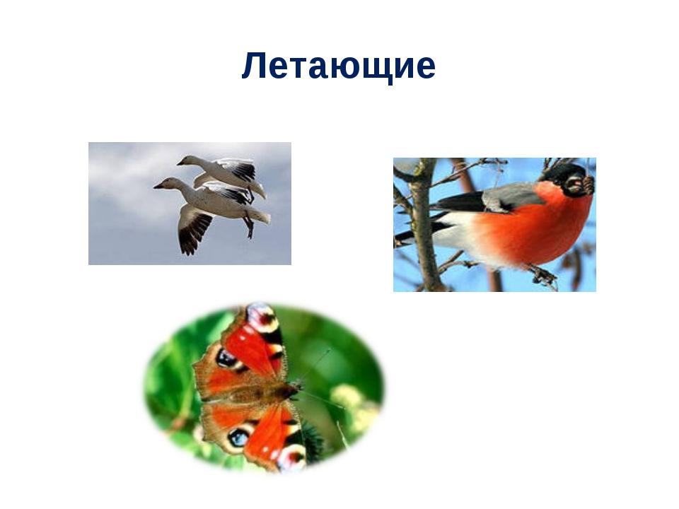 Летающие